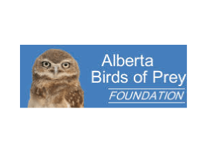 Alberta Birds of Prey